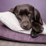 La importancia de dormir lo suficiente