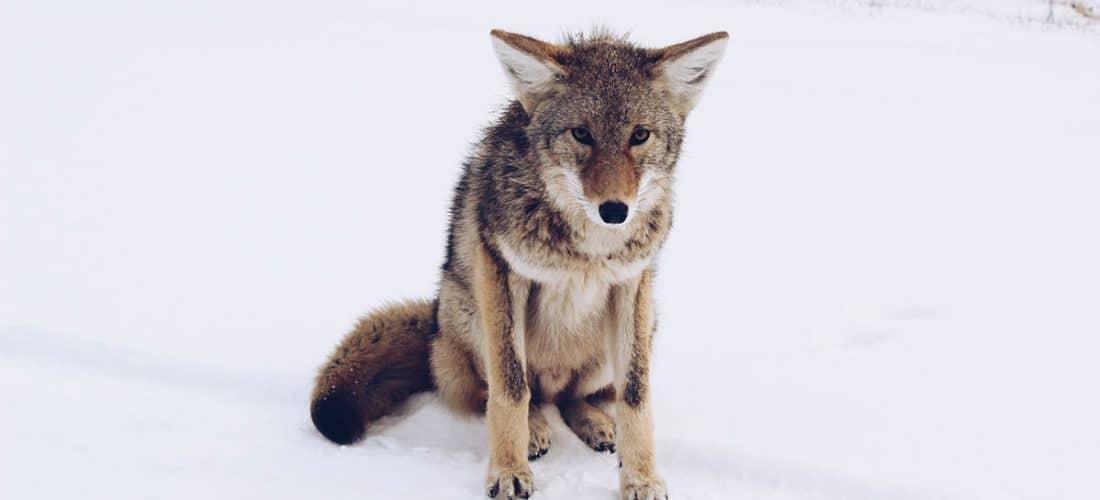 Por Qué el coyote debería haber denunciado a ACME